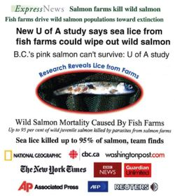 salmon farming in british columbia and sea lice essay Sea lice in british columbia, canada in its sea lice management strategy 2007/2008, the british columbia ministry of agriculture concluded: no direct cause and effect relationship between sea lice, salmon farming and wild salmon populations has been established.