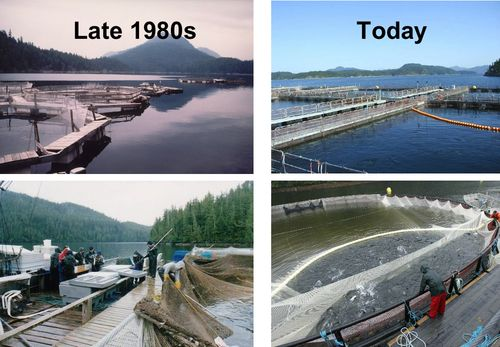 Salmon Farms Then vs. Now