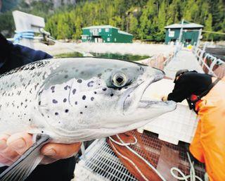 Bill Keay, fish