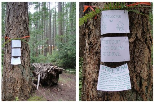 Treedom Big Tree & 3 Signs